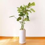 foliage_plant01