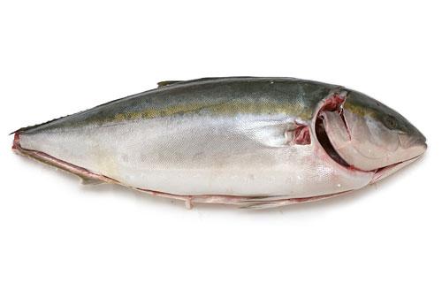 活じめ黒瀬ぶり 丸物 魚の形に並べた