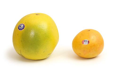 ポメロ グレープフルーツ サイズ比較