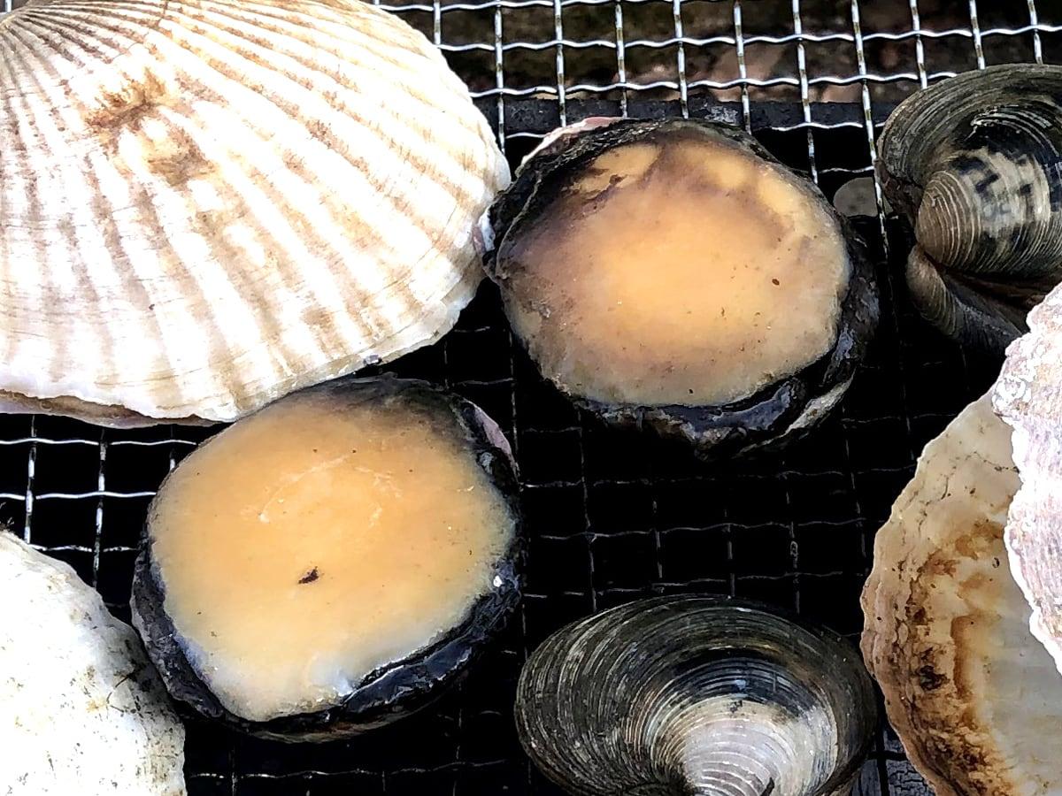 貝盛バーベキューセット ロコ貝(アワビモドキ)