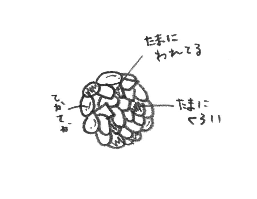 杏仁脆餅(イラスト)