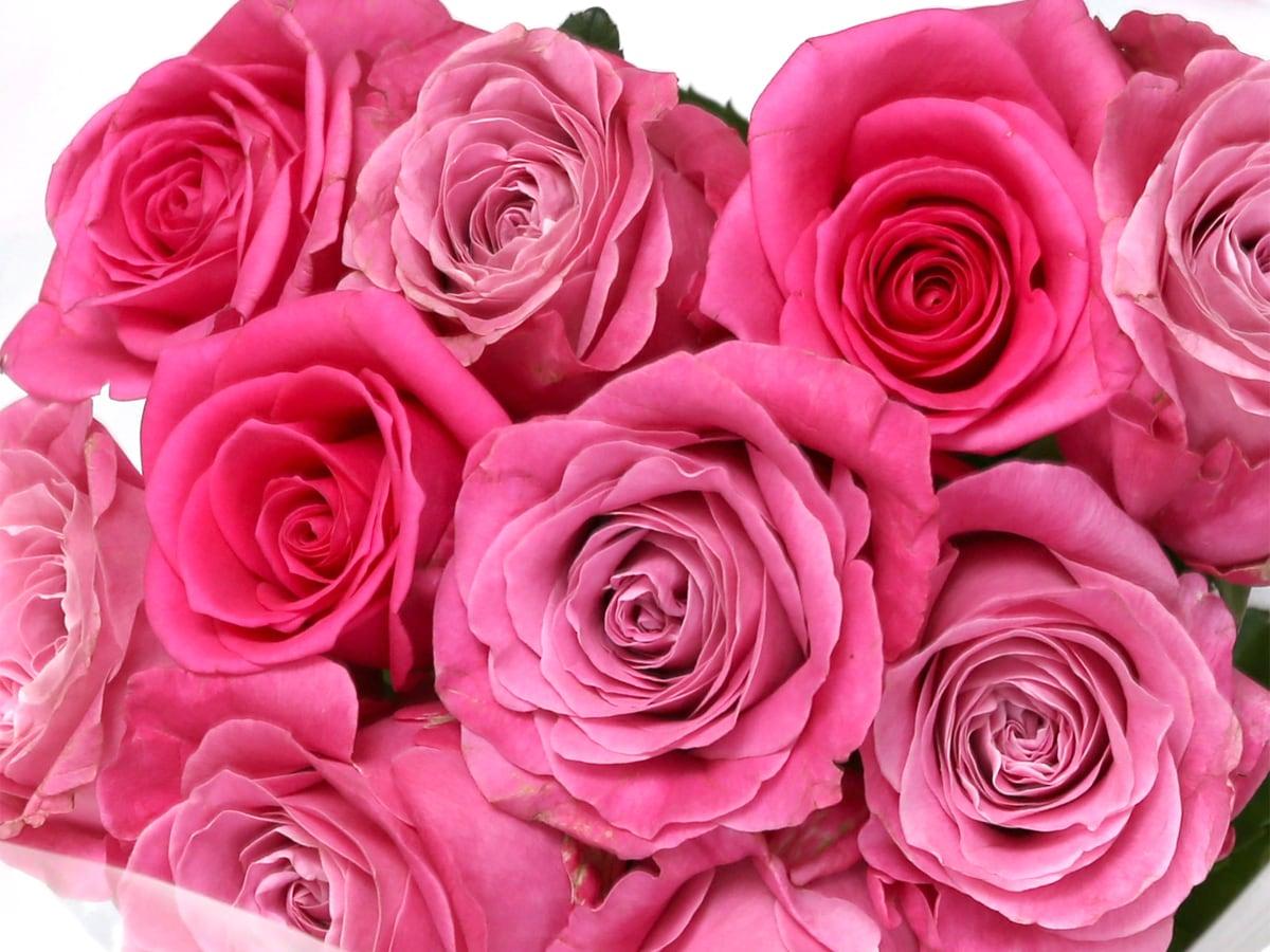 コストコの薔薇の花束 アップ